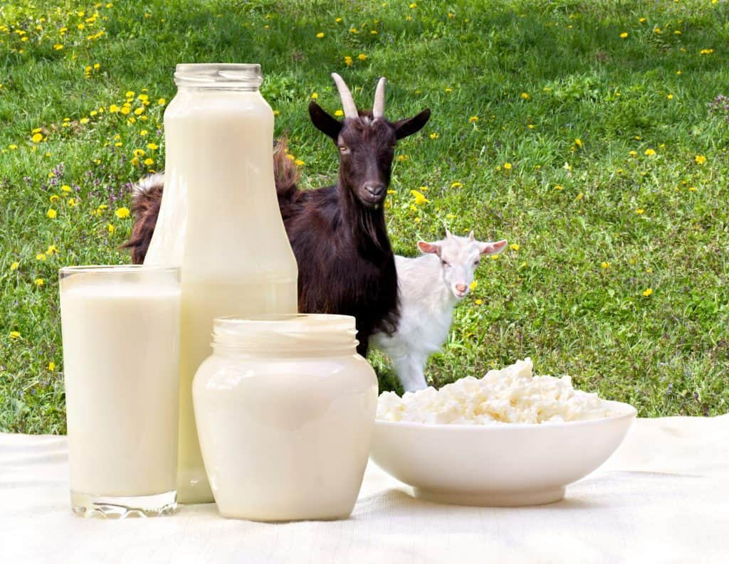 Khasiat dan Manfaat Susu Kambing Etawa