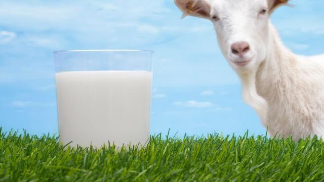 Mengenal Susu Kambing dan Komposisinya