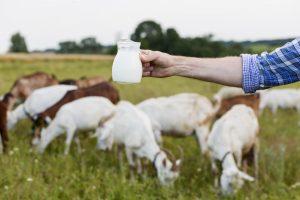 jual susu sheepbrand